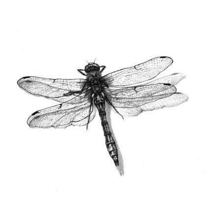 Dragonfly. Documentary